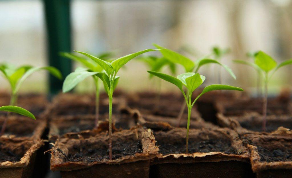 Szklarnie sposobem na wysokie plony